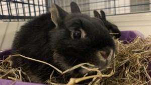 Dier van de week: konijnen zoeken een nieuw baasje