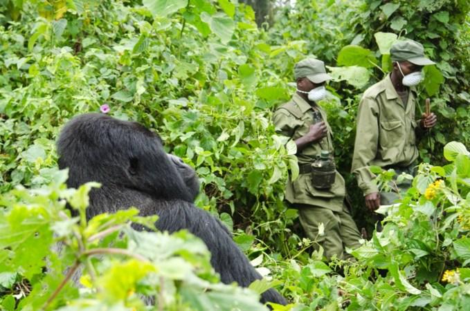 Moord op gorillabewakers Congo leidt tot woedende reacties