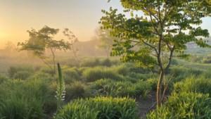 We kunnen ons nu al verheugen op een museumjaar vol engelen, gras, bos en een overleden architect