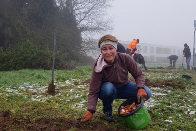 Vrijwilligers planten bloembollen in Beekdaelen