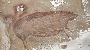 45.000 jaar oude grottekening van wrattenzwijn op Sulawesi is oudste ooit gevonden