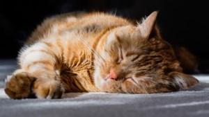 Dierenambulance Midden-Limburg vraagt aandacht voor chippen huisdieren