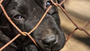 Dierenbescherming haalt verwaarloosde dieren weg bij eigenaar in Ittervoort