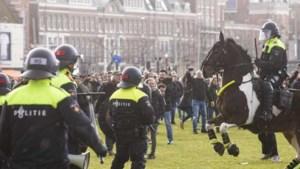Drie paarden op Museumplein mishandeld met ploertendoder: 'Onacceptabel'