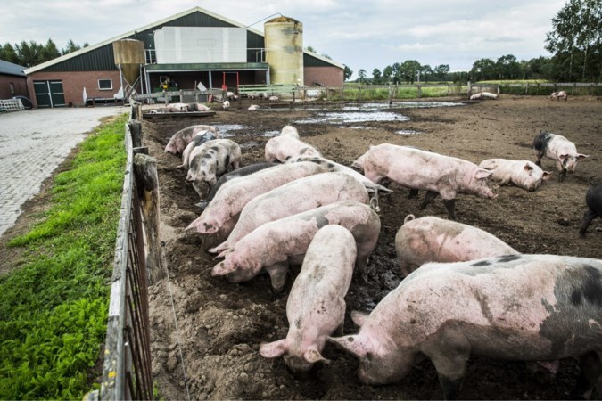 Varkenshouder in Heibloem mag bedrijf veranderen in bedrijfsverzamelgebouw en dagbesteding