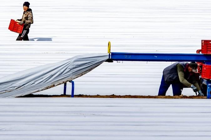 Uitzendkoepel ABU: 'Nederland raakt bij arbeidsmigranten uit de gratie'