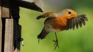 Nu de winter eraan komt kunnen vogels <BR />wel wat extra beschutting gebruiken