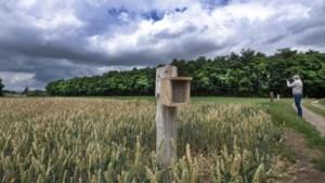 Boze boeren trekken houten bijenpalen uit de grond