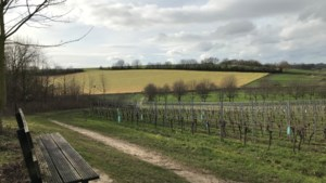 Winters wandelen langs wijngaarden in Winthagen