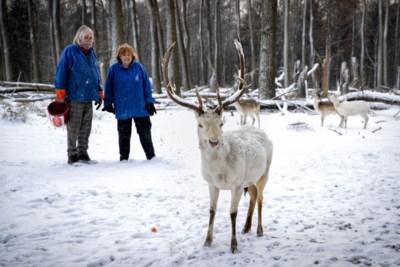 Jetty uit Nederweert vreest voor wolf na aantreffen doodgebeten herten: 'Het maakt onzeker: komt hij terug?'