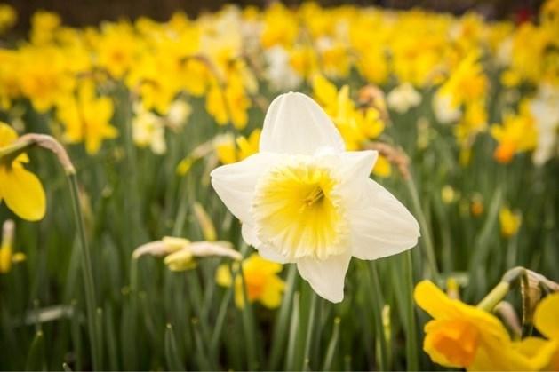 Komend weekend lenteachtige temperaturen verwacht