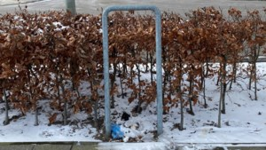 Grote ergernis in Stein over rondslingerende hondendrollen: 'Baasjes te lui of onverschillig'