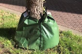 Stein onderzoekt nieuwe methodes om bomen ook in droogte en hitte van genoeg water te voorzien