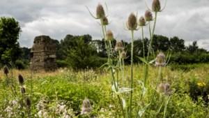 Initiatief voor bloemenlint door heel Limburg voor insecten