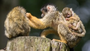 Minister Schouten eist van dierentuinen 'plan voor de toekomst' in ruil voor staatssteun