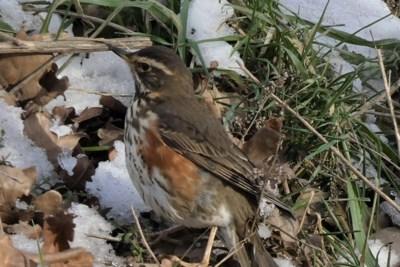 Mens & natuur: hoe je ook wel eens een heel mooie vogel kunt missen...