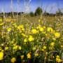 Partij voor de Dieren koopt grond in Maasbracht om om te vormen tot natuur