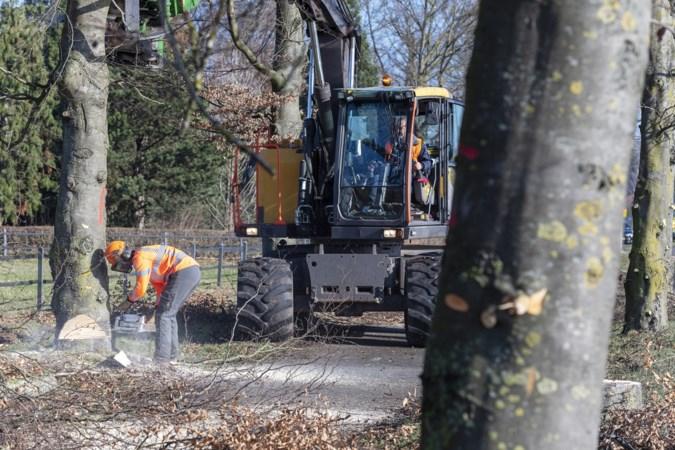 Kaalslag langs de Napoleonsbaan in Baarlo: provincie kapt 93 bomen