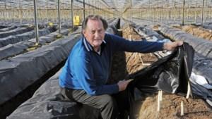 Pionier Math Teeuwen uit Helden ontwikkelt kameleonfolie voor aspergevelden: 'Meer oogsten met minder mensen en een betere kwaliteit'