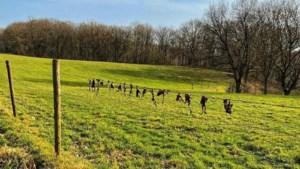 Dierenbeul doodt vijftien padden in Landgraaf door ze aan prikkeldraad op te hangen
