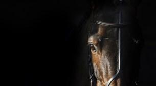 Paardenwereld in de ban van dodelijk virus: 'Brand is een nachtmerrie, maar dit virus is helemaal desastreus'
