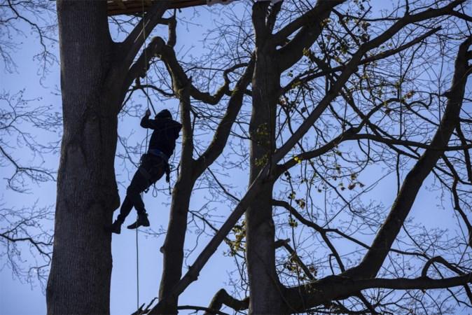 Strijd om een restant bos in Aken: activisten bezetten bomen en trotseren de zaag