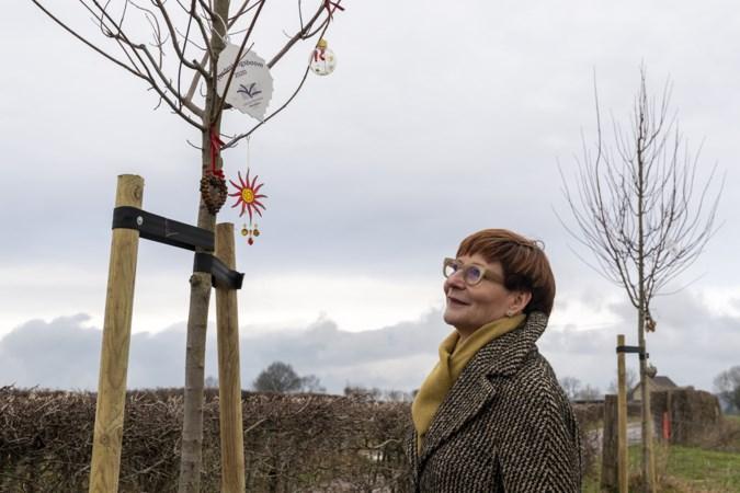 Wat in Vijlen begon met één boom is uitgegroeid tot een herdenkingsroute voor overledenen van zeven kilometer