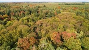 Staatsbosbeheer plant één hectare nieuw bos in Merselo