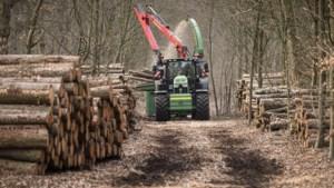 Natuurlijk herstel en herplanten van stukken bos gaan hand in hand in De Meinweg