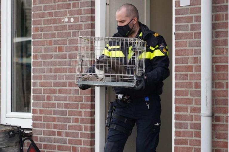 Video: Twintig katten en een papegaai in beslag genomen