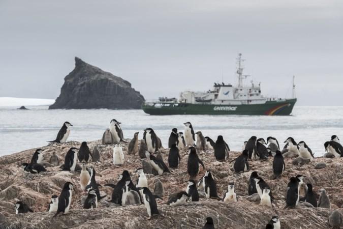 Heerlenaar verzet zich tegen expedities van Greenpeace naar Zuidpool