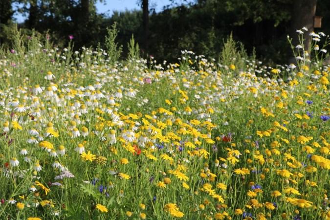 Dorpsraad Oirlo zoekt vrijwilligers voor aanleg en beheer bloemenweide op veld bij Haalakker