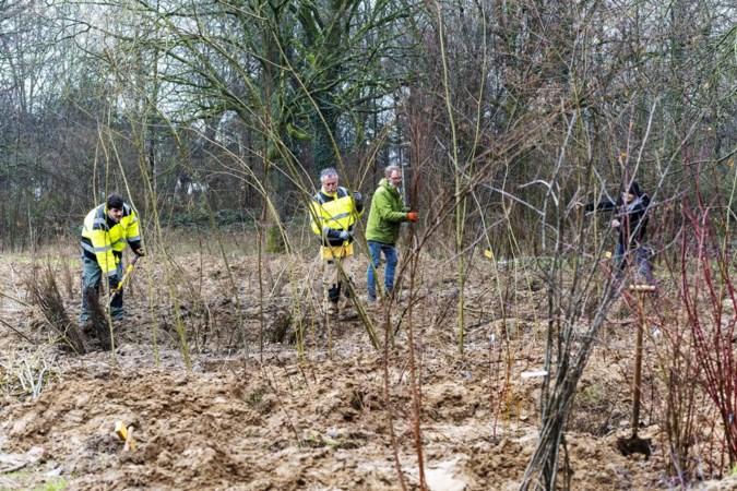 Sportcampus Watersley kapt bomen in Sittards groengebied, maar zegt er veel meer terug te planten