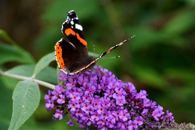 Gratis online cursus 'biodiversiteit in jouw tuin' voor inwoners van gemeente Kerkrade