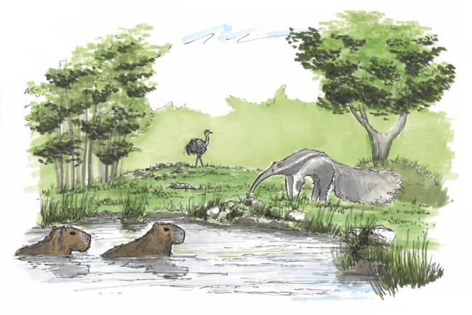 ZooParc Overloon bouwt verder aan stukje 'Zuid-Amerika'