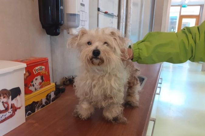 Verwaarloosde hond 'Dupke' aan boom achtergelaten in Hoensbroek; Dierenbescherming zoekt info over baasje