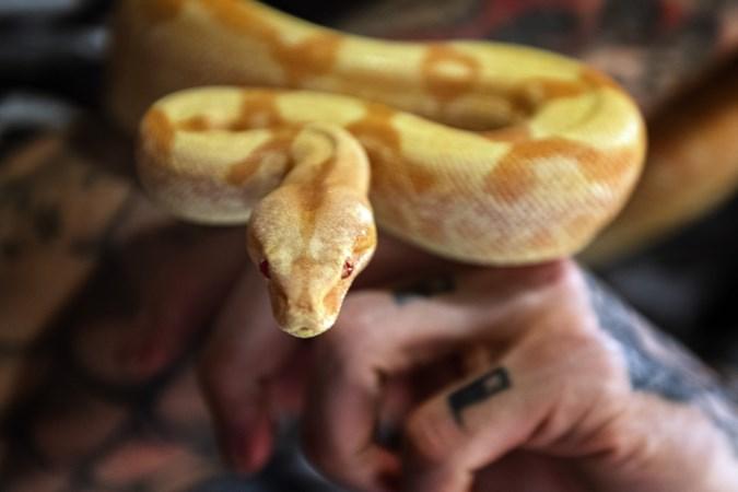Bijzondere dierenliefde: mensen met een slang als huisdier