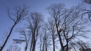 Eigenaar wil bosgrond Chorusberg in Aken verkopen, buurt geïnteresseerd om eigen woud te planten