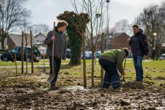 'Groene oases' op zes plekken in Heerlen moeten voor een bloemenlint zorgen