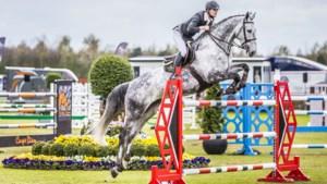 Onderzoek naar hoeveel geld hippische bedrijven naar Limburgse paardengemeenten als Horst aan de Maas laten stromen