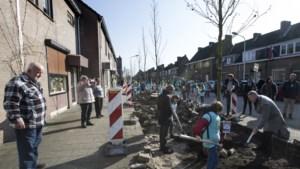 Frankenstraat in Maastricht voorzien van nog een serie zuilplatanen