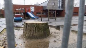 Beek gaat bomenbeleid aanpassen, mede na kap op schoolpleinen