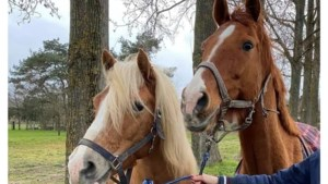 Hoe konden Sylvana's paarden uit hun wei in Herkenbosch ontsnappen? 'Dit is opzettelijke vernieling'