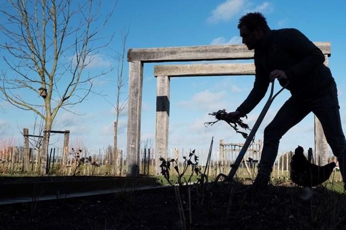 Tuinrubriek: Ook in een schaduwrijk hoekje kun je gezellig tussen het groen zitten