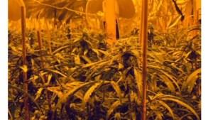 Politie ruimt wederom een grote hennepplantage in Geleen