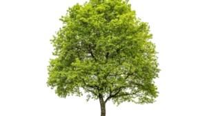 Duizenden nieuwe bomen voor Trichterbos