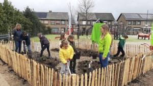 Leerlingen van De Bottel uit Lottum verbouwen colakruid en dropplantjes in hun voedselbosje op het schoolplein