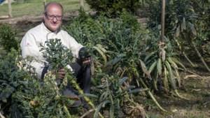 Chef-kok Jean van restaurant uit Schinnen is trots op zijn groene Michelinster: 'We lopen in Limburg altijd wat achter'