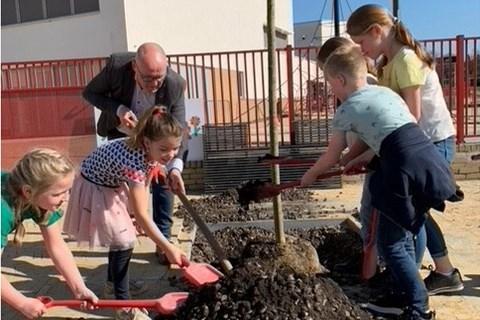 Eerste bomen voor Heerlens plan om duizend bomen te planten staan in de grond