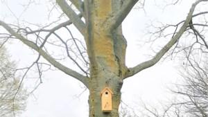 Broedplekken voor vogels bij BC Broekhin